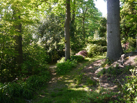 The Woodland Garden at Spinners